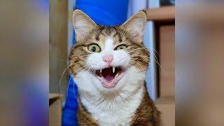 Смешные кошки и собаки 2019 Новые приколы с котами до слёз, смешные коты приколы 2019 funny cats #58