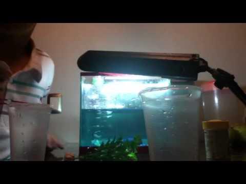 Papilla para bettas preparaci n doovi for Como criar peces koi