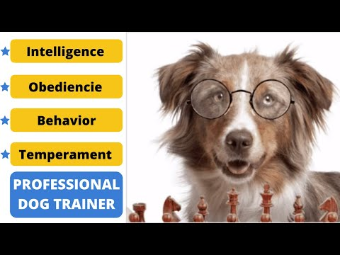 brain-training-for-dogs---how-to-train-a-dog-to-stop-barking