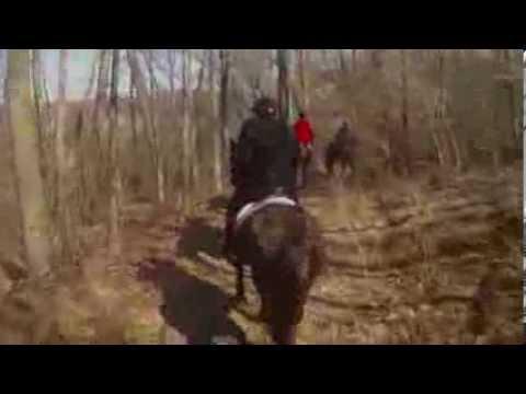 Mounted Fox Hunting in Michigan