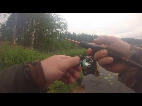 рыбалка Ленинградская область 2019