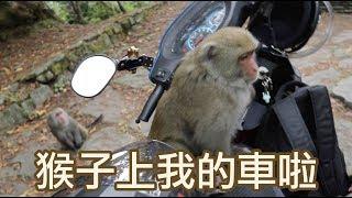 【英雄日常】EP12 出發阿里山 欸! 這猴子上我的車啦!