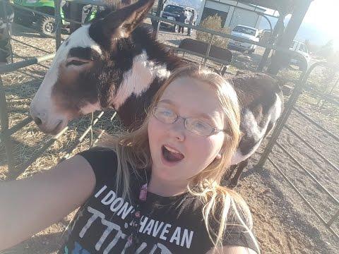 donkey-rescue