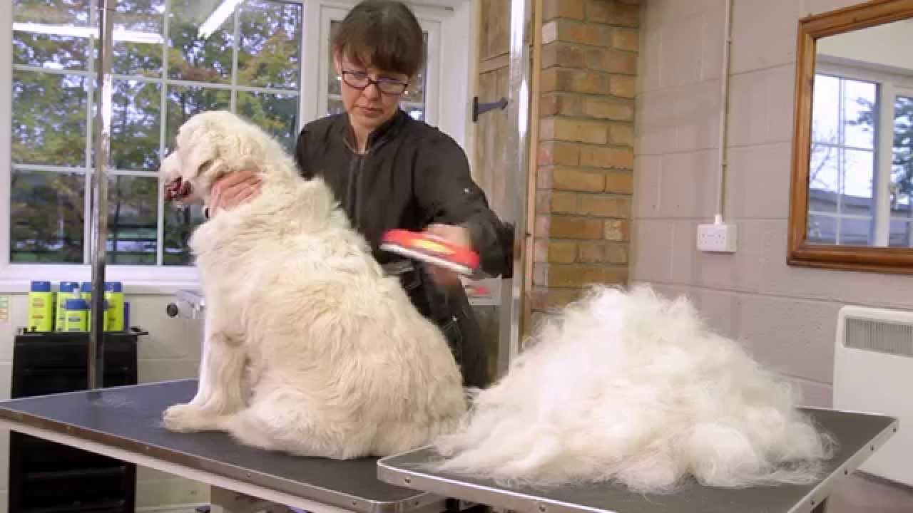 Cepillos de muda FURminator para perros - YouTube bac7b3708a01