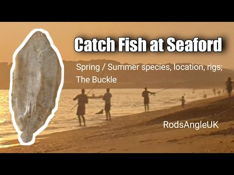 Catch Fish At Seaford: SPRING/SUMMER SPECIES, LOCATION, RIGS, THE BUCKLE