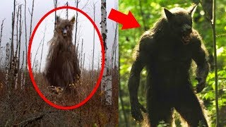 Werewolves + Mysterious Creatures Caught on Tape