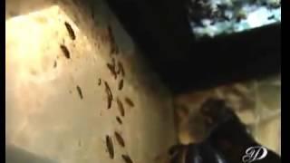видео уничтожение тараканов и клопов в Москве