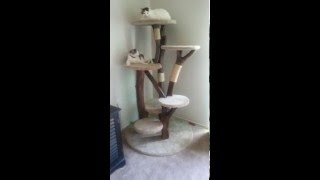 Real Cat Tree. Custom Cat Condo. Diy