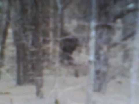 Bigfoot caught on cell phone Newmarket NewHampshire=2016