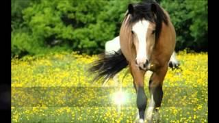 Koń - Niesamowite zwierze ♥