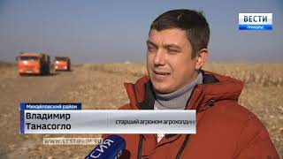 В Приморье убирают зимнюю кукурузу