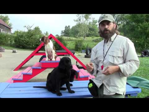 The truth about dog training systems  Part 1