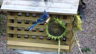 DIY... Bird feeder house for small birds only!
