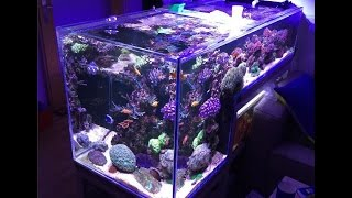 Drop Off Reef Tank