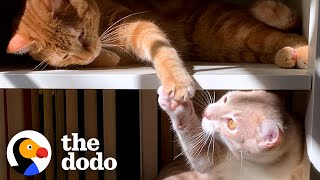 Cat Hates His New Kitten Brother And Hisses At Him Until... | The Dodo Cat Crazy