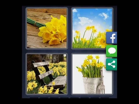 4 images 1 mot niveau 945 hd iphone android ios for Plante 4 images 1 mot
