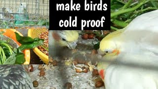 winter care of birds-- ultimate tips to save birds from cold attack.