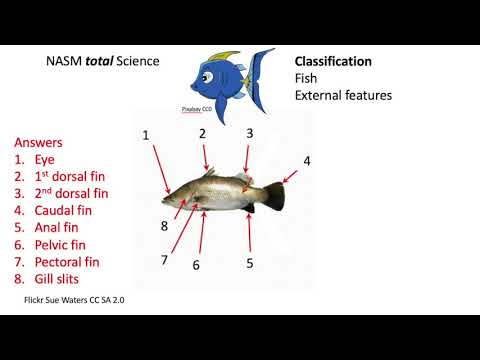 Classification FISH: External Features Review WIS