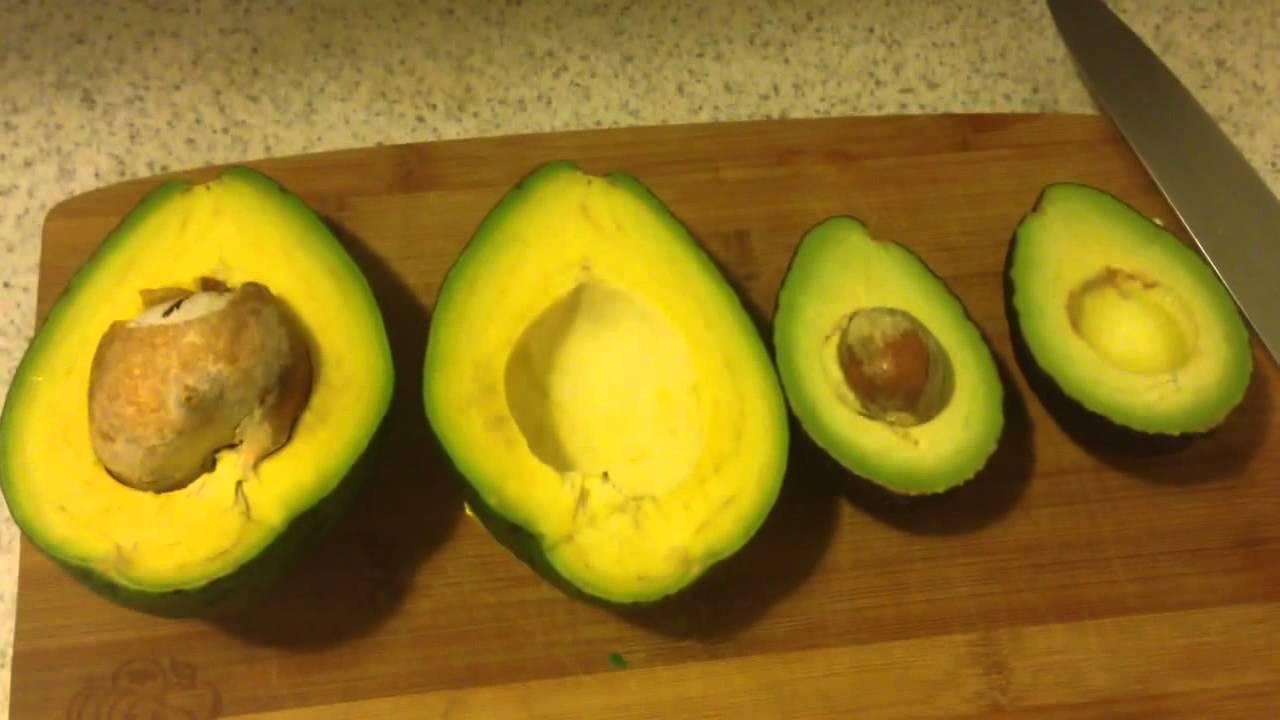florida avocado vs hass avocado youtube rh youtube com