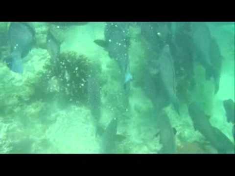 Sipadan Island Borneo (Jackfish Storm, Bumphead Parrotfish, Turtles)