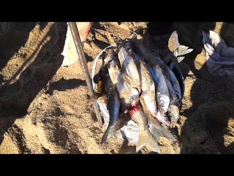 Pesca pejerrey playas maldonado (muy buena)