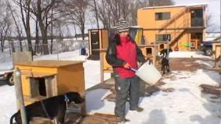 2001年に犬ぞりと出会い、2006年には愛犬6頭と共にアラスカへ...