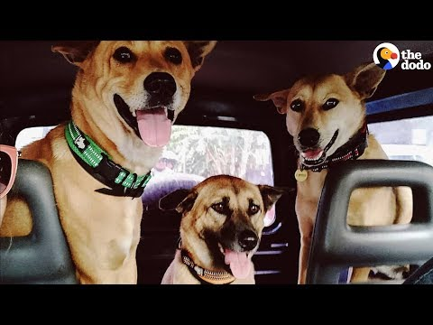 Nothing Makes This Couple Happier Than Adopting Street Dogs | The Dodo