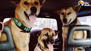 nothing-makes-this-couple-happier-than-adopting-street-dogs-the-dodo