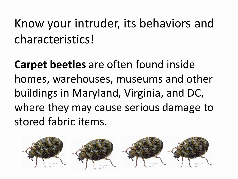 Pest Control Service Rid Fly Flea Ant Bee Mites Bugs