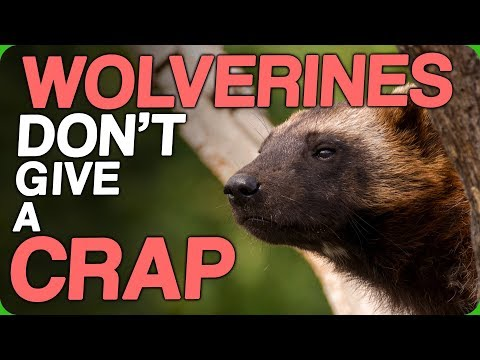 Wolverines Don't Give A Crap (Animated Shows We Wanna See On The Big Screen)