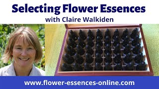Selecting Flower Essences by Dowsing
