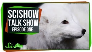 Introducing: SciShow Talk Show!  Emily, Rhinos, and Cas the Arctic Fox