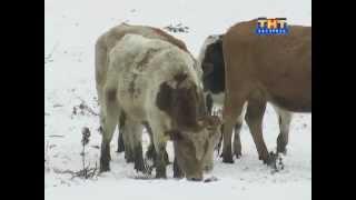 Начинающий фермер 2012.11.30