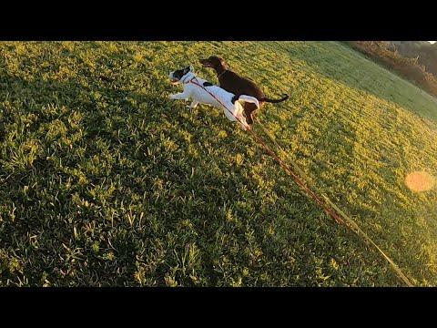 Vídeo do Jovem Cão SRD no Treino de cães Caniroa