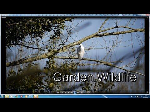 My Garden Wildlife