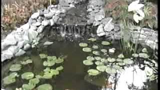 Garden Pond Basics - Part A