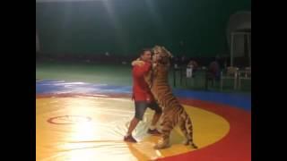 Самбо с тигром Керчь 2016