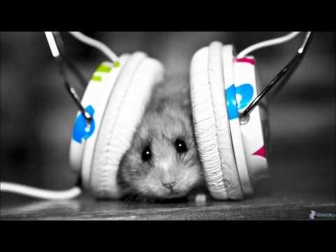 Muzică tare