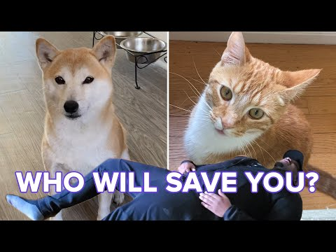 """Cats And Dogs React To Their Owners """"Playing Dead"""""""