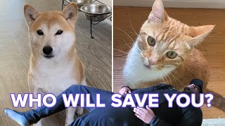 "Cats And Dogs React To Their Owners ""Playing Dead"""