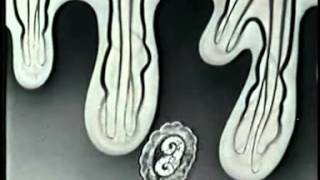 Многоклеточные животные. Тип Круглые черви