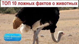 ТОП 10 ложных фактов о животных
