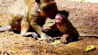 Breaking my heart ! Popeye fight Polly seriously until baby convulsive ,Popeye very angry baby