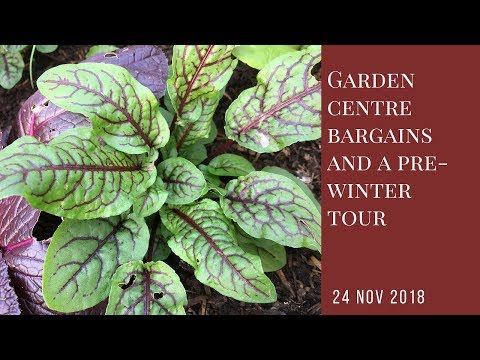 Garden centre bargains and a pre-winter allotment tour