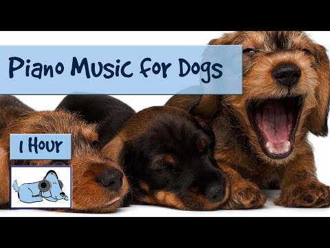 Relaxing Piano Music for Dogs, Calm Your Dog with Soft Soundscapes and Piano Music, Prevent Anxiety