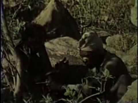 Rhodesia Unafraid     (Part 2/2) - newrhodesian.net