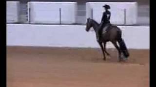 Varsity Equestrian National Championship