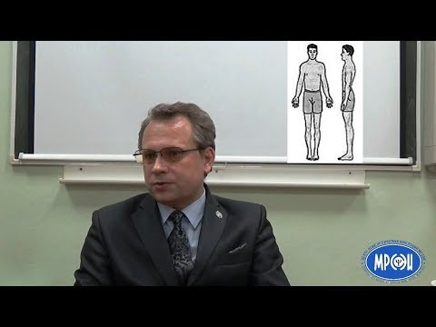 Габитарные классификации  Связь телосложения и характера у мужчин и женщин