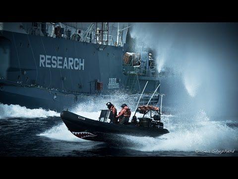 Sea Shepherd Talk - West Midlands Vegan Fair Part 1