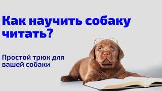 Как научить собаку читать? Трюковая дрессировка собак